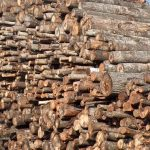 apvalios medienos pirkimas